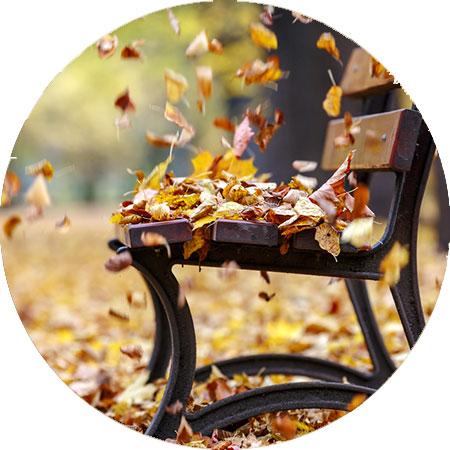 foto herfstkleuren herfst